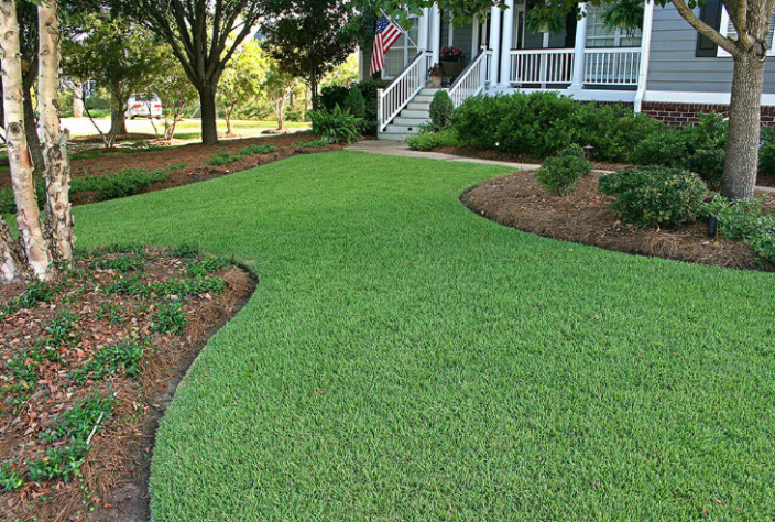 The Best Weed Killer for Zoysia Grass – Top 5 Picks